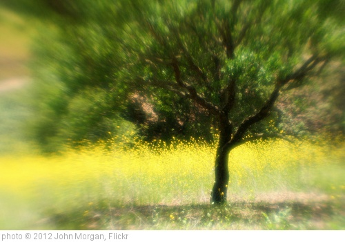 'Oak and Mustard' photo (c) 2012, John Morgan - license: http://creativecommons.org/licenses/by/2.0/