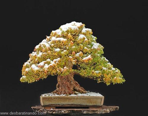 bonsais arvores em miniatura desbaratinando (30)