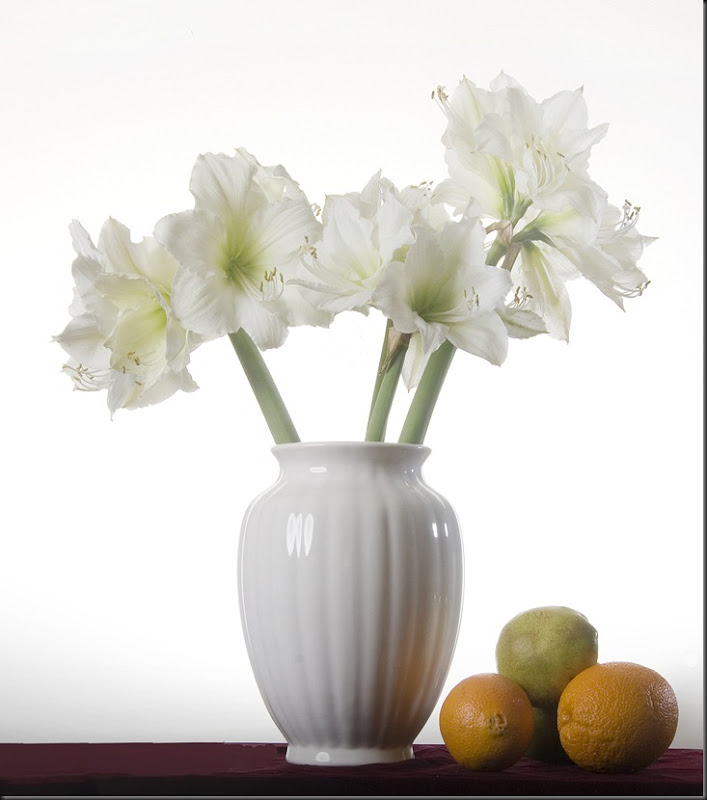 My White Amaryllis