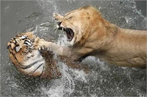 Amazing struggle survival - wild nature 05