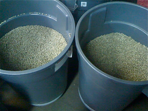 Unroasted coffee beans stay fresh in these bins for up to 6 months. The bin on the left is filled with beans from the Nicaraguan highlands. The beans on the right, from Panama, are the ones I ultimately scooped up for the shoot.