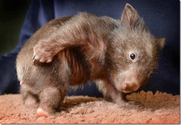cute-baby-animals-35