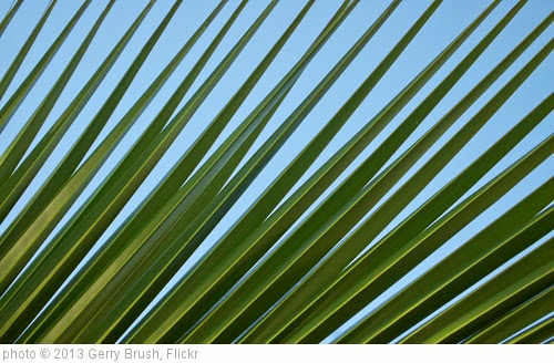 'Palm blades against California sky' photo (c) 2013, Gerry Brush - license: https://creativecommons.org/licenses/by-sa/2.0/