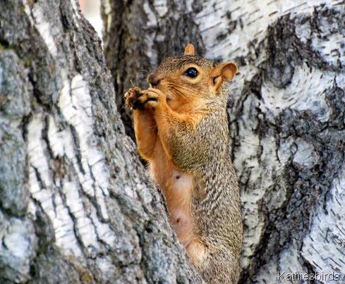 15. squirrel-kab