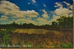 Marsh at Bombay Hook_D074955 Bombay Hook  May 09, 2011 NIKON D7000