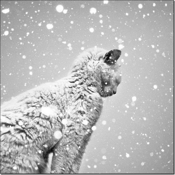 cats-play-snow-30