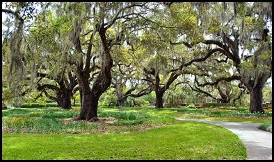 01c - Brookgreen Garden Amazing Live Oak