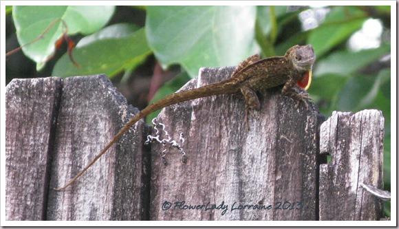 07-19-lizard