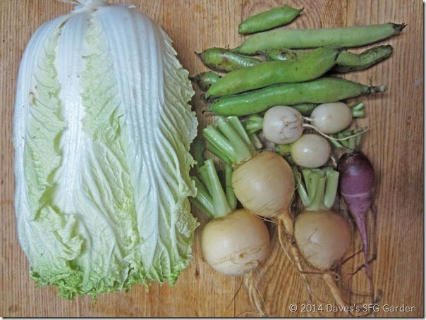 cabbage&turnips