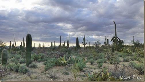 Saguaro NP West_047