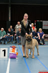 20130510-Bullmastiff-Worldcup-0295.jpg