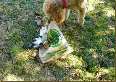 Lulu meets Daisy9
