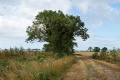 130804 Bognor trees 105 ecopy