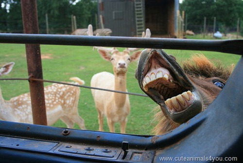 50_Funniest_Animal_Photobombs_Of_All_Time_08