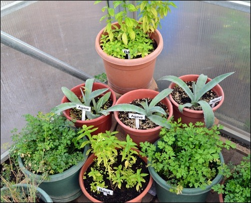 potted herb corner