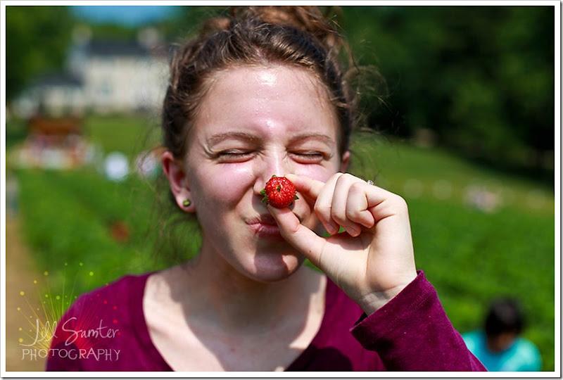 strawberryfields-5005