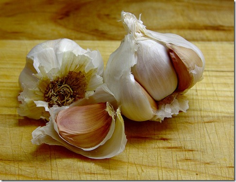 garlic_bg_20090519