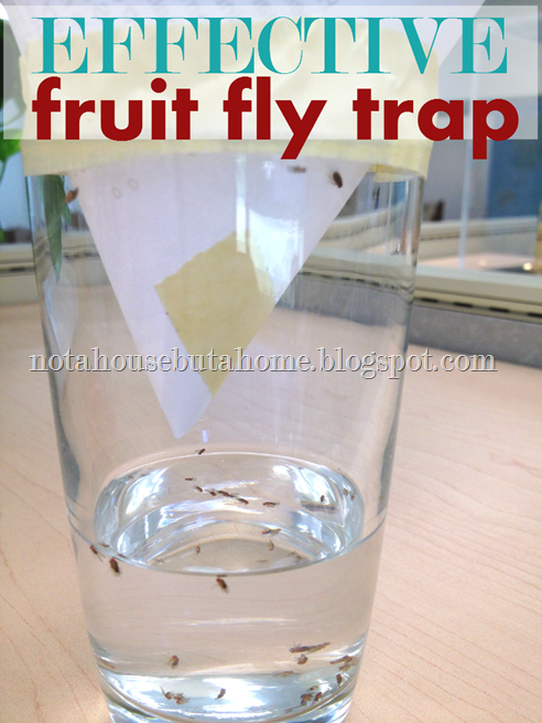 Effective Fruit Fly Trap
