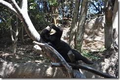 San Diego Zoo 7