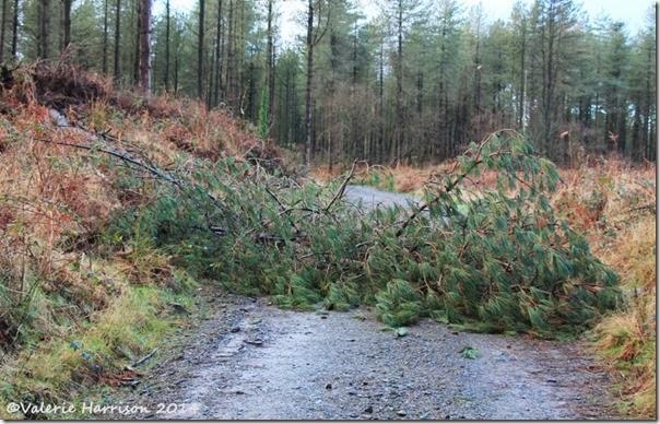 5-fallen-trees