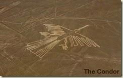 nazca-condor