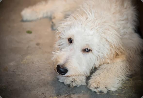 pet shop dog Charlie Willow Flower Company Orange Girl Photography 995231_769092423106430_92865611_n