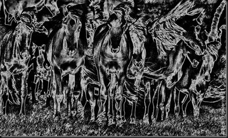 pm_20110625_horsesBW