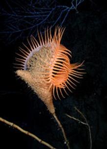 Amazing Pictures of Animals, photo, Nature, exotic, funny, incredibel, Zoo, Sea anemones, Actiniaria, Alex (19)