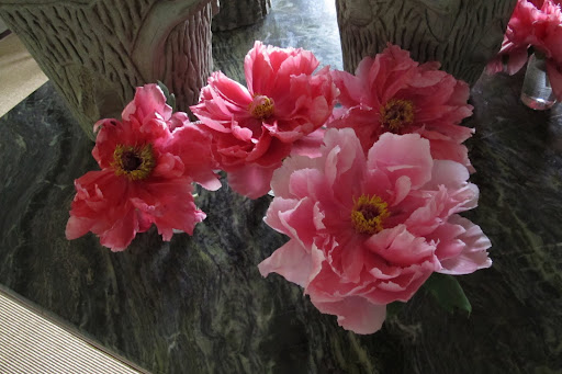 Martha will love these beautiful tree peonies that we arranged in the house.