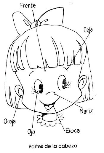 Aparatos del cuerpo humano para colorear preescolar - Imagui