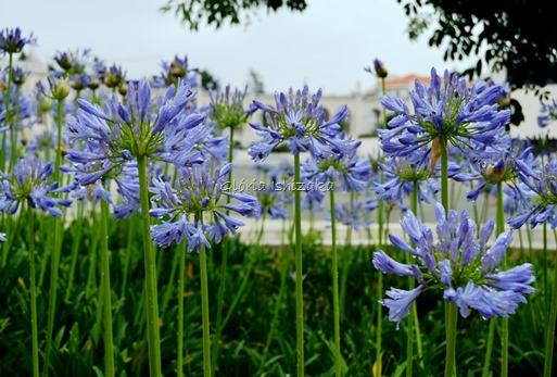 Azul - Glória Ishizaka 33