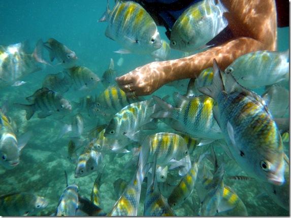 Punta Cana 326