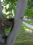 We saw nests that were skillfully made by mama and papa birds!