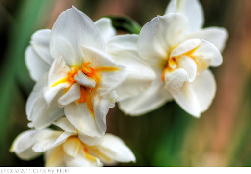 'Spring Flowers' photo (c) 2011, Curtis Fry - license: http://creativecommons.org/licenses/by/2.0/