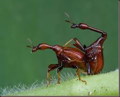 Amazing Pictures of Animals, photo, Nature, exotic, funny, incredibel, Zoo, Giraffe weevil, Insecta, Alex (6)