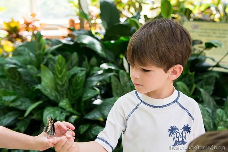 Callaway Gardens butterfly garden blog-18