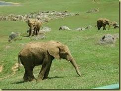 Elefante cabarceno