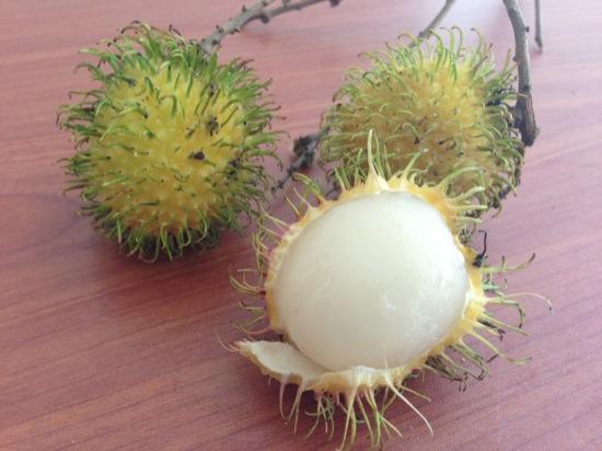 Yellow/Green Rambutan - Nephelium lappaceum