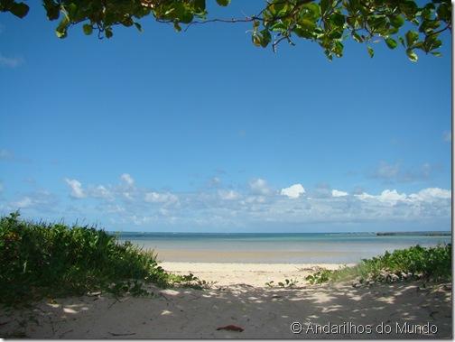 Praia de São Miguel dos Milagres Alagoas Amendoeira