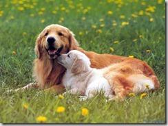 Leishmaniosi canina: il contagio