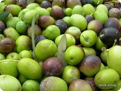 olivefruit