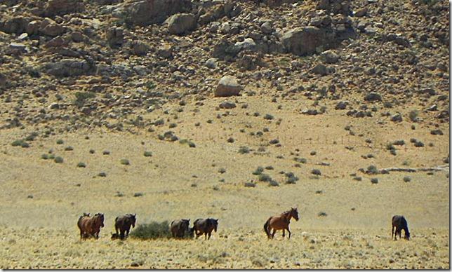 Namibia_DSCN5761