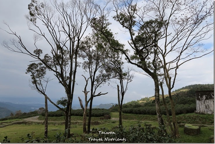 三峽熊空茶園 (36)