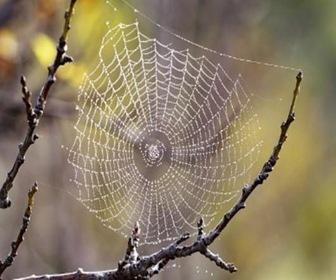 seda-de-arañas-conduce-calor-