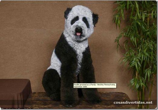 cosasdivertidas animales teñidos  (10)