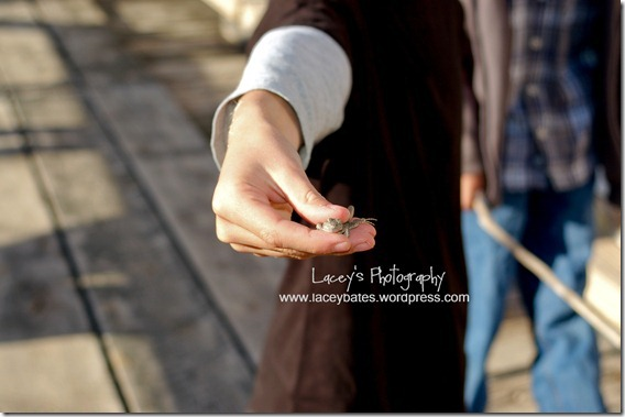 lacey's photography (4)