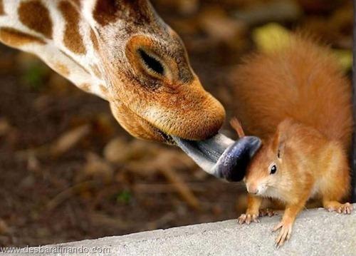 fotos de animais na hora certa desbaratinando  (28)
