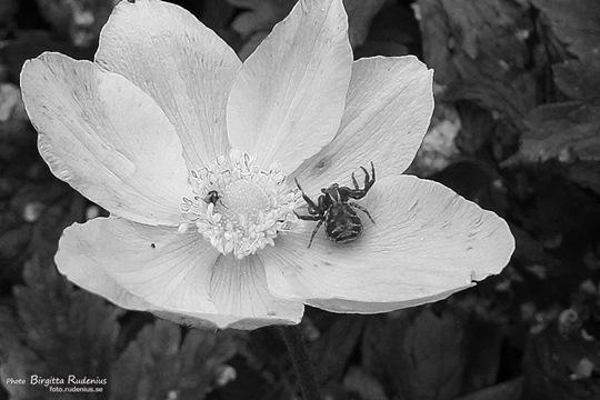 bw_20110729_spider