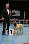 20130510-Bullmastiff-Worldcup-0467.jpg