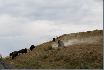 Yellowstone 053